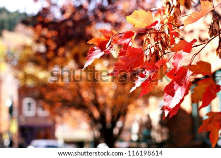 Autumn leaves in Park City, Utah - stock photo