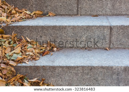Autumn leaves in the corner of stone stairs