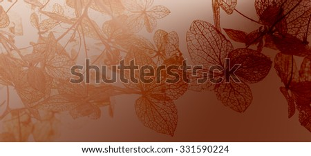 autumn leaves in the detail - stock photo
