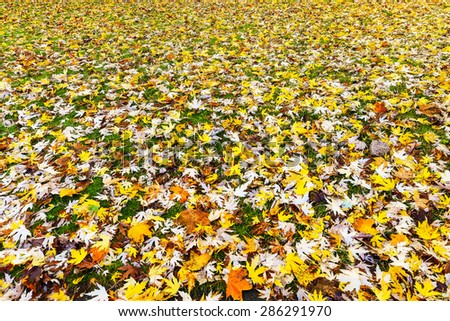 Autumn leaves in the lawn - stock photo