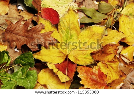 Autumn leaves in the park - stock photo