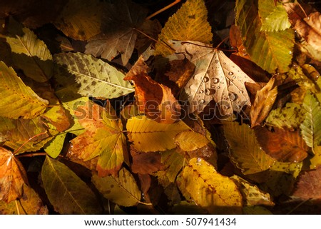 Autumn leaves in the water. Can be used as background