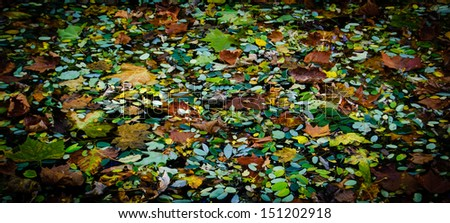 Autumn leaves in water. Shaded angles. - stock photo