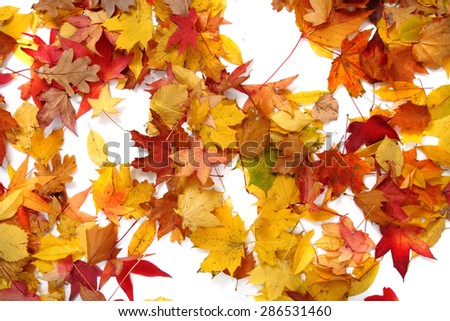 autumn leaves isolated on the white background - stock photo