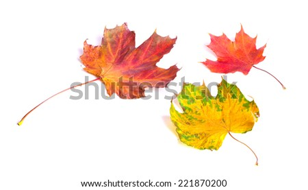 Autumn leaves, isolated on white - stock photo