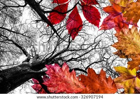 autumn leaves isolated on white background - stock photo