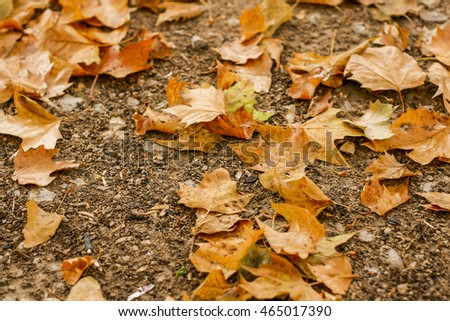 Autumn leaves laying on the brown ground