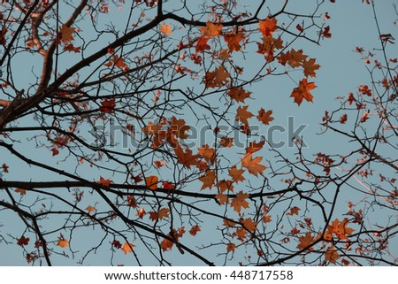 autumn leaves look like the stars on the sky - stock photo