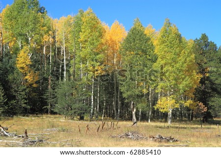 autumn leaves near Flagstaff - stock photo