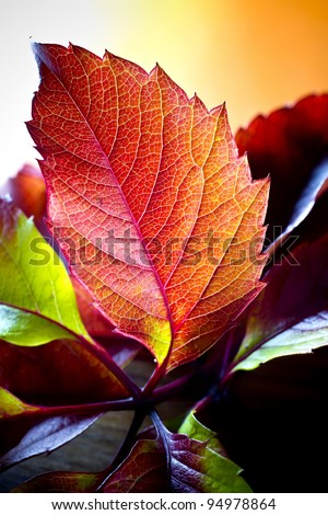 Autumn leaves nice bright colors. - stock photo