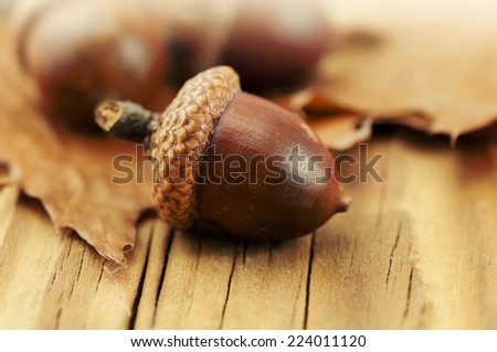 Autumn leaves oak acorns - stock photo