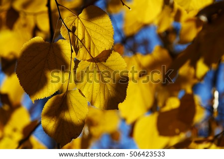 Autumn leaves, october