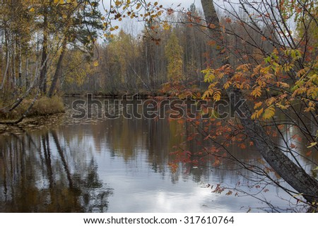 Autumn leaves of a mountain ash in the foreground on the background of the river and the forest.