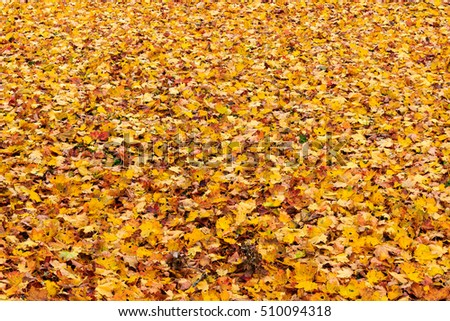 Autumn leaves of trees in the park
