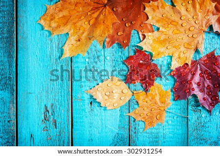 autumn leaves on a beautiful board. wet leaves after a rain. October and November leaves . background for photos . water drops. there is a place for an inscription - stock photo