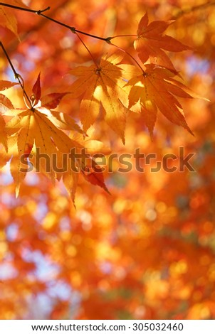Autumn leaves on a bright sunny background - stock photo