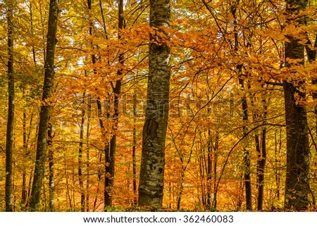 Autumn leaves on a clear sky background. Horizontal view of autumn leaves in a sunny day.