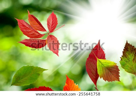 autumn leaves on a green - stock photo