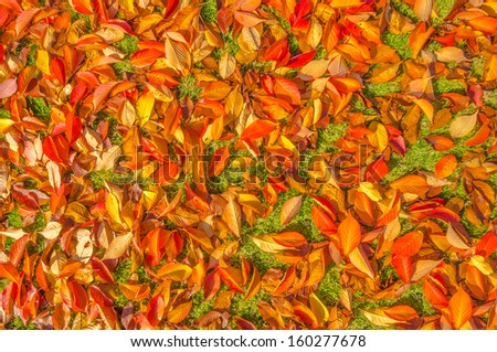 Autumn leaves on a meadow - stock photo