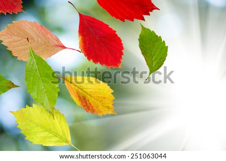 autumn leaves on a sun background - stock photo