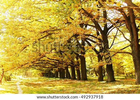 Autumn leaves on a tree in a park background