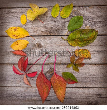 Autumn leaves on a wooden background old
