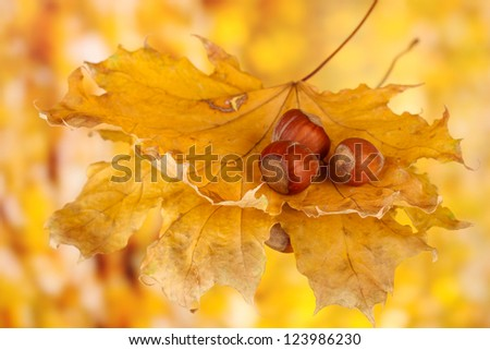 Autumn leaves on bright background, macro close up
