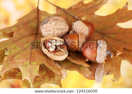 Autumn leaves on bright background, macro close up - stock photo