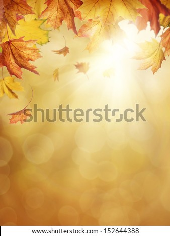 Autumn leaves on colorful background - stock photo