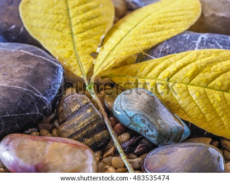 Autumn leaves on rocks on stream in forest