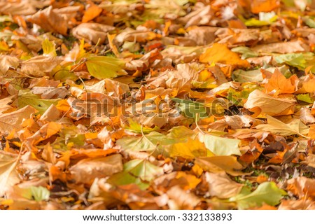 Autumn leaves on the ground in high resolution