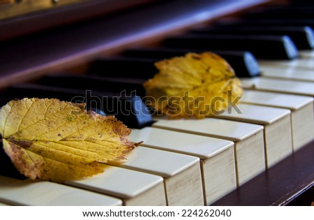 Autumn leaves on the piano keyboard  - stock photo