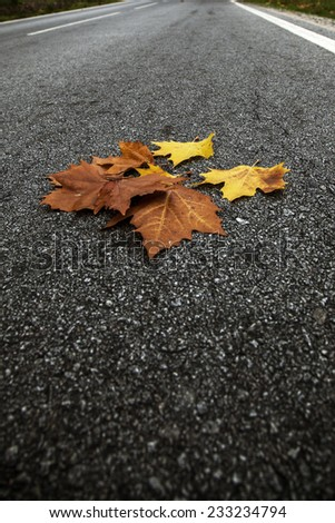 autumn leaves on the road