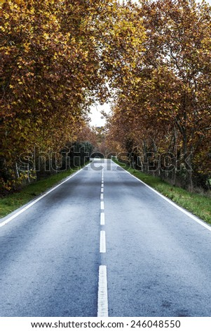 autumn leaves on the road - stock photo