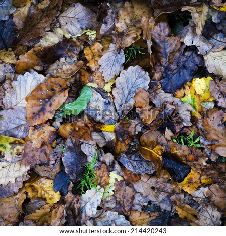 Autumn leaves on the wet ground for seasonal background