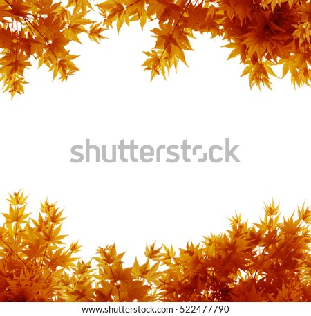 Autumn Leaves on White Backgroundd