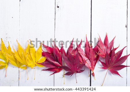 autumn leaves on white wooden table background