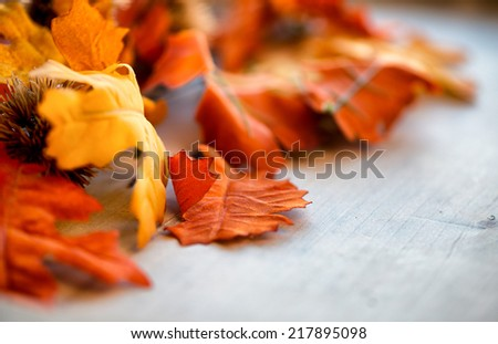Autumn Leaves on Wooden Surface with Selective Focus - stock photo
