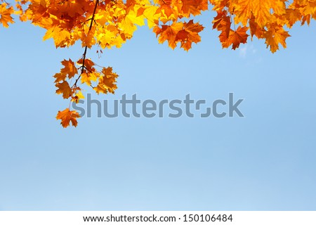 Autumn leaves over blue sky background - stock photo