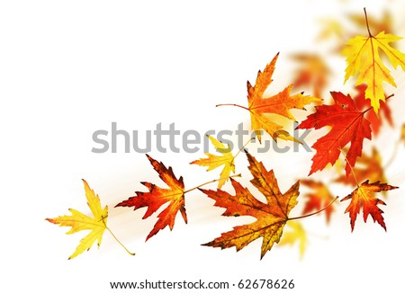 Autumn Leaves over white - stock photo