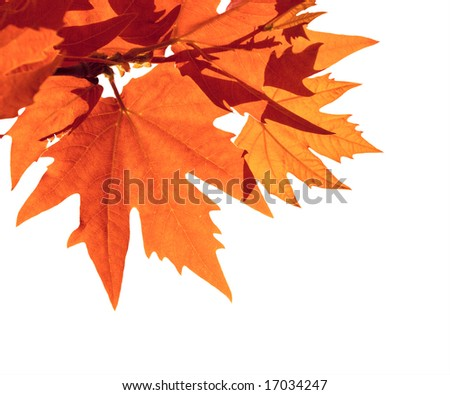 autumn leaves over white background, shallow focus - stock photo