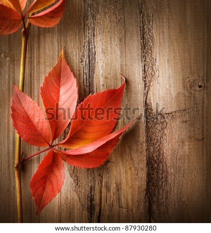 Autumn Leaves over wood background with copyspace