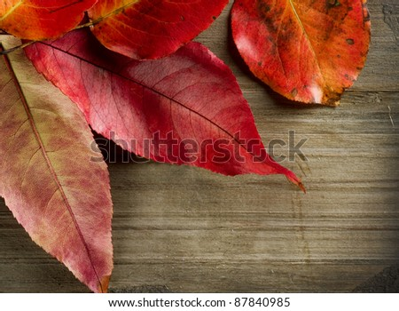 Autumn Leaves over wooden background with copyspace - stock photo