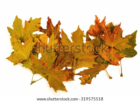autumn leaves pile isolated, colors - stock photo