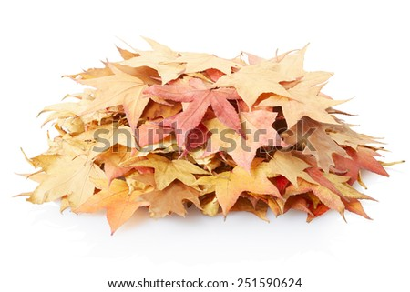 Autumn leaves pile isolated on white, clipping path included - stock photo