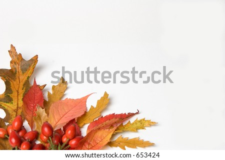 Autumn leaves & Rosehip border