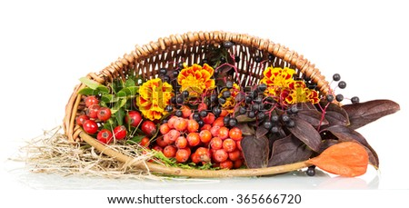 Autumn leaves, rowan in the basket close-up isolated on white background - stock photo