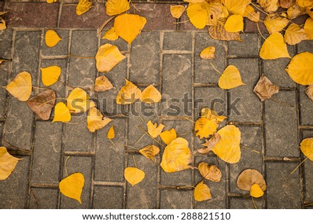 Autumn leaves scattered on a cobblestone street - stock photo