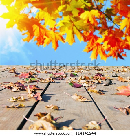 autumn leaves scattered on the wooden floor - stock photo