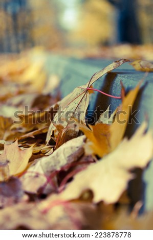 Autumn leaves/selective focus - stock photo